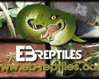 EB Reptiles.com