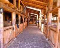 Cheval Alsace- Randonnées et séjours équestres
