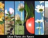 Céline Photos Art Nature. wifeo .com