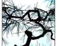 Vitraux Honfleur - L'Amande et l'Obsidienne