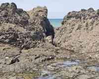 La Cotentin
