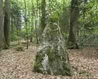 Menhirs de la Forêt de Haute-Sève