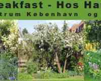 Bed & Breakfast - Hos Hanne Bach
