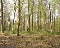Forêt de Roumare