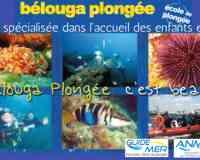 Bélouga Plongée