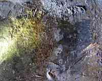 Grotte de la Vache (Hérault)