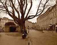 Rue Riguepels