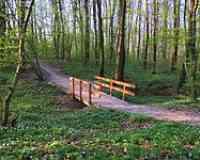 Bois de la Foretaille