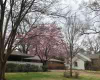Chickasaw Gardens Lake
